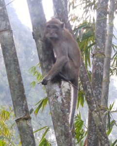 Macaque scoping out the new guests