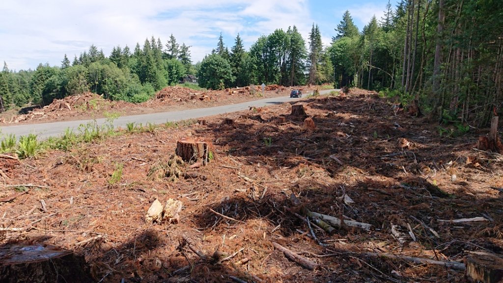 Clearcut strip next to our house