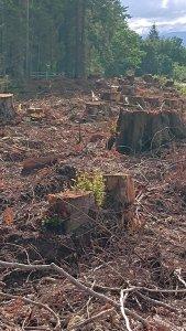 Stumps and slag