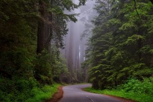 Road curves through misty forest