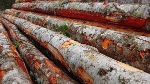 a pile of dead alder logs