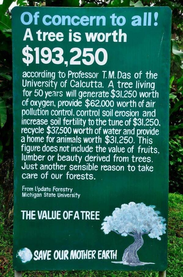 A sign about the $ value of a tree