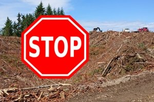 Stop sign superimposed on a clearcut