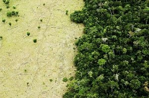 Amazon jungle next to deforested land