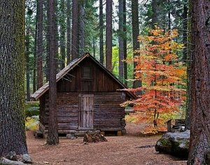 log shack in the woods