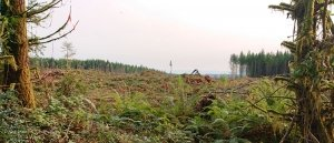 clearcut heart of the park
