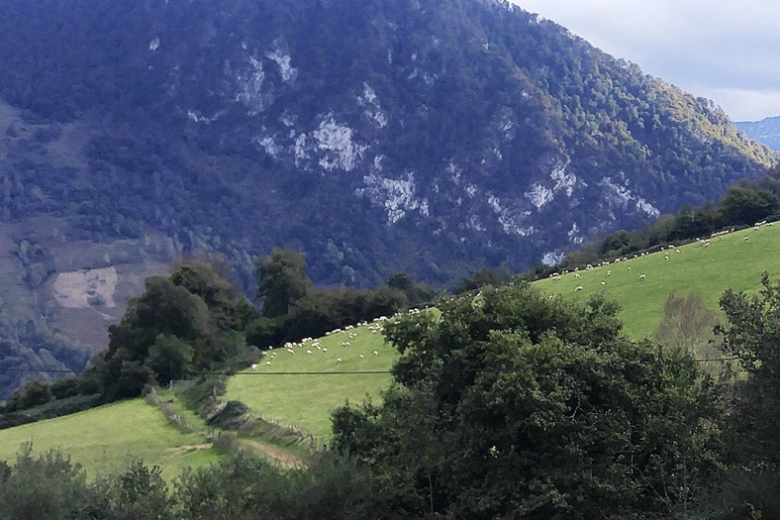 Sheep in a Pyrenees pasture