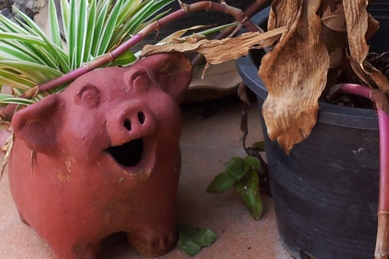a pig-shaped planter pot