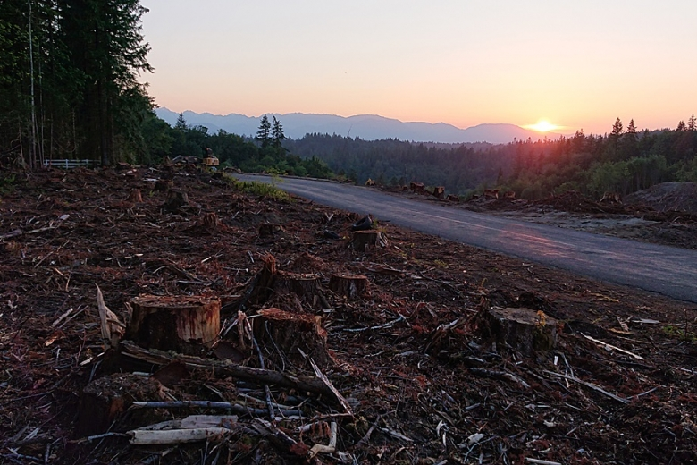 Sunset over the clearcut, looking towards the Olympic mountains
