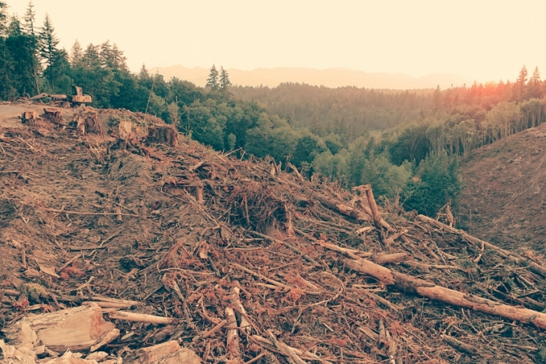 A clearcut swath of forest
